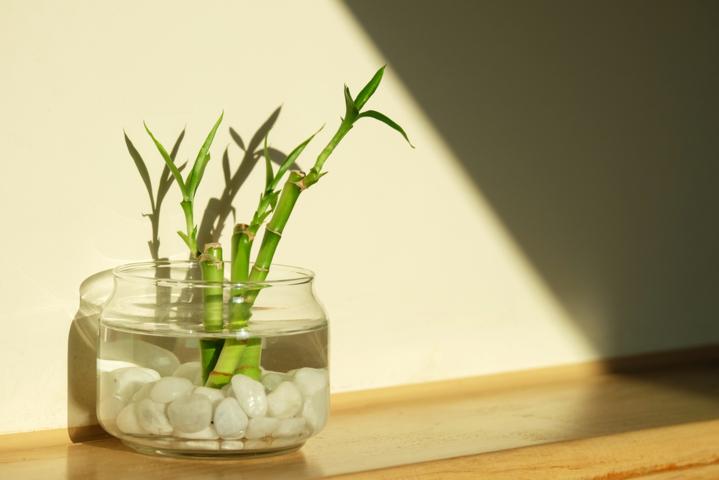 amuletos de buena suerte bambú