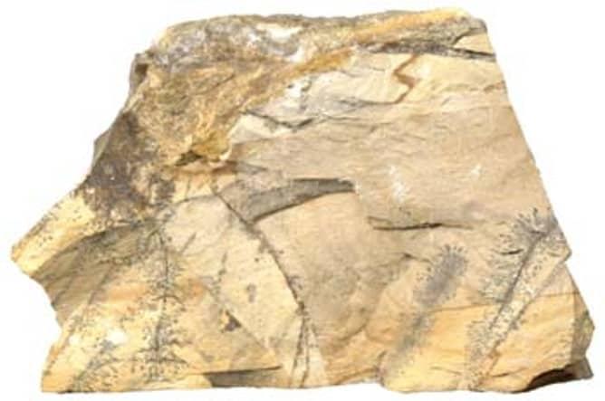 Pedazo de piedra caliza compacta